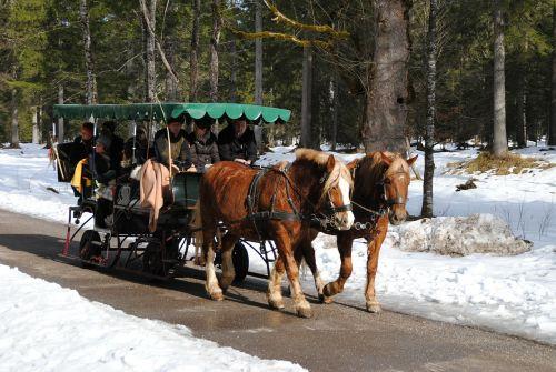 berchtesgadeno nacionalinis parkas,Nacionalinis parkas,berchtesgaden,ramsau,arkliai,treneris,arklio taksi,žiemą