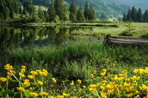 bergsee bog lake lake