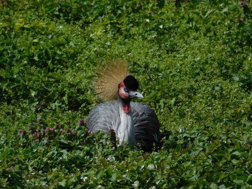 berlin zoo birds headdress