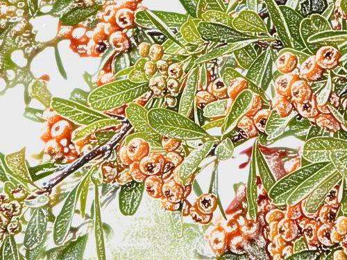 Berries Bush Background