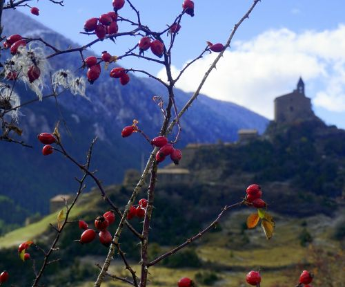 berries red autumn