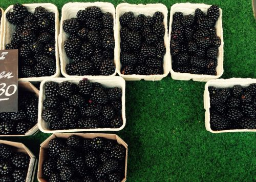berries blackberries black