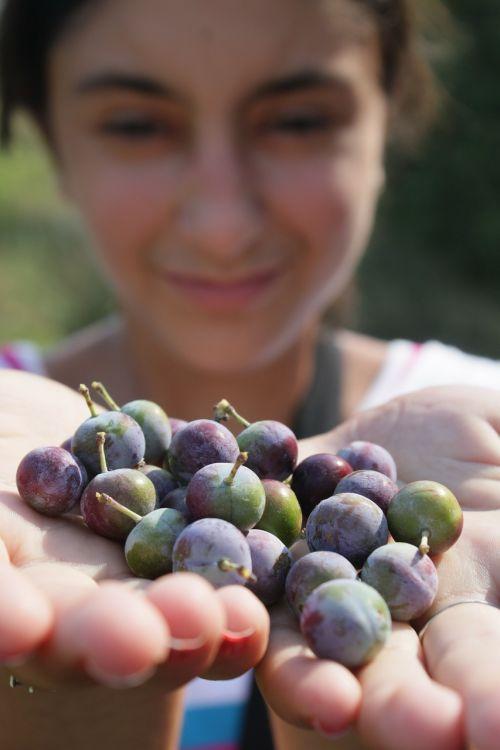 berries blackthorn blue