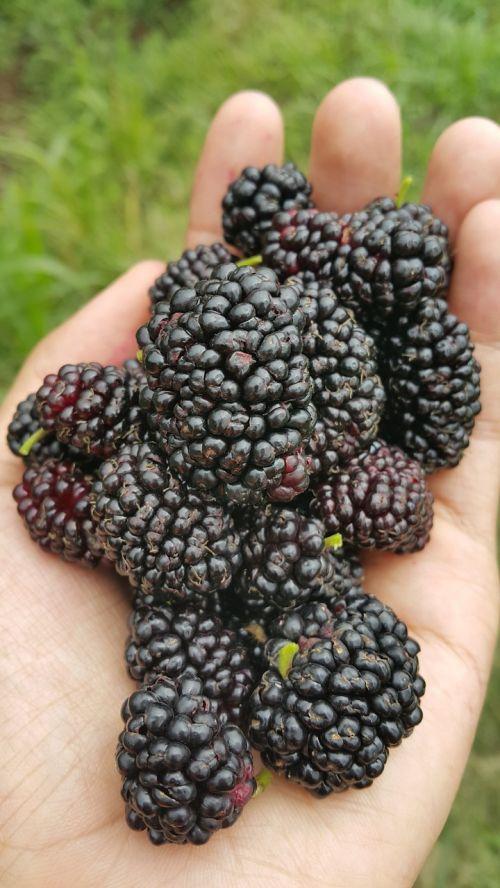 fruit nutritious nutrition