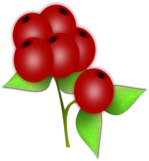 berry bunch edible