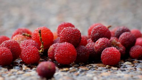 berry bayberry red