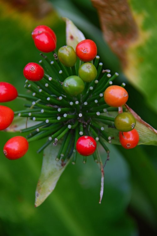 berry  red berry  berry plant