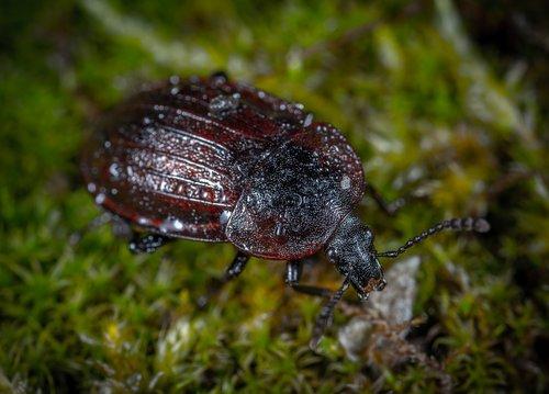 bespozvonochnoe  beetle  nature