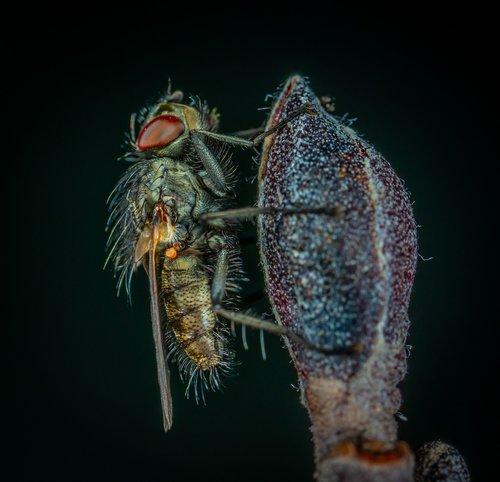 bespozvonochnoe  insect  nature