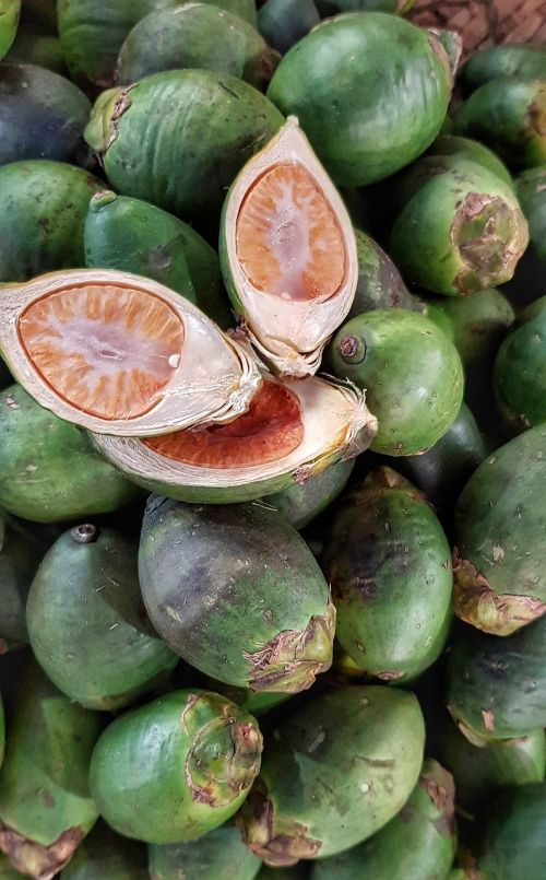 betel nut betel palm chewed
