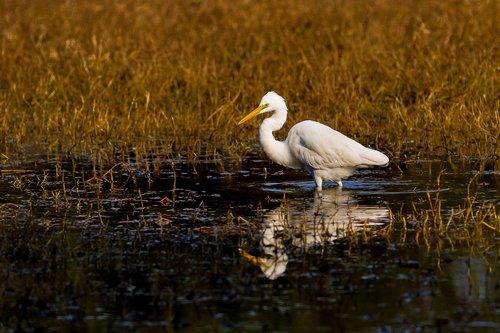 bharatpur  birds  sanctuary