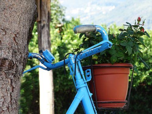 bicycle blue rose
