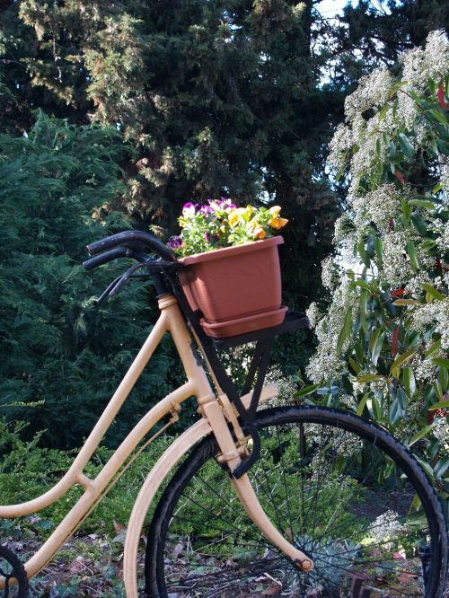 bicycle flowers scenic