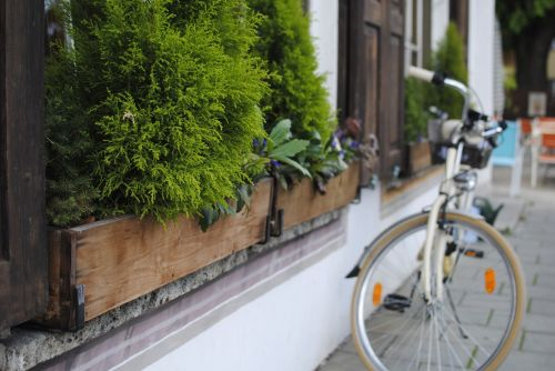 bicycle plant europe