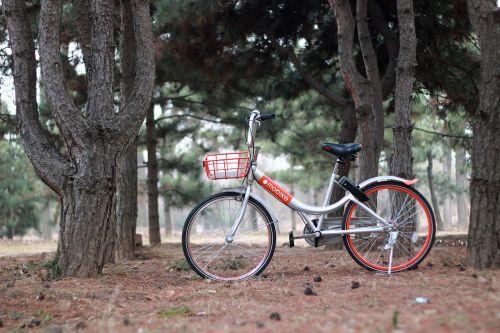 bicycle bike mount worship