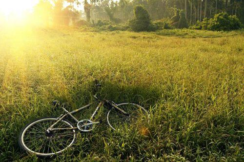 bicycle bike field