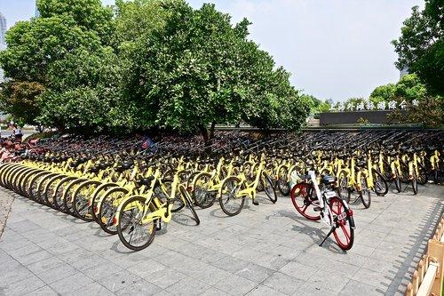 bicycles  rental  yellow