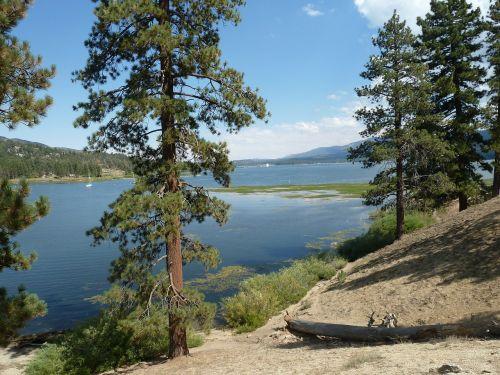 big bear lake forest