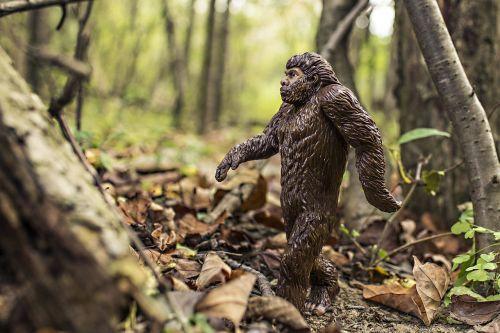 bigfoot evolution anthropoid ape