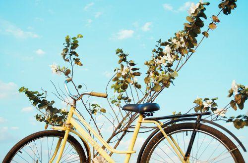 bike bicycle mountain bike