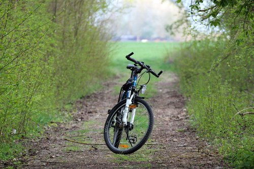 bike  forest path  nature