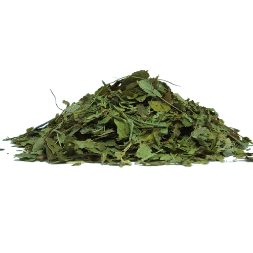bilberry bilberry leaf herbs