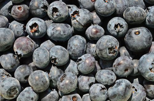 bilberry american berries fruit