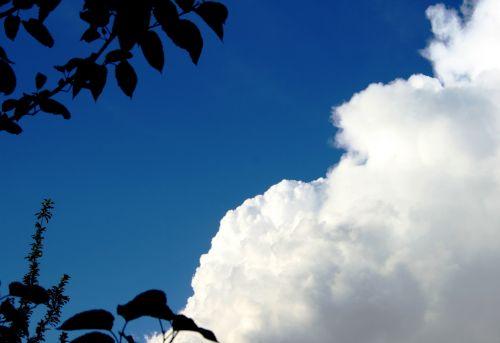 Billowing Cumulus Cloud