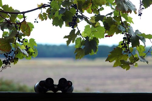 binoculars  bunch of grapes  view