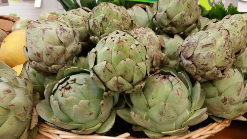 artichokes vegetable bio