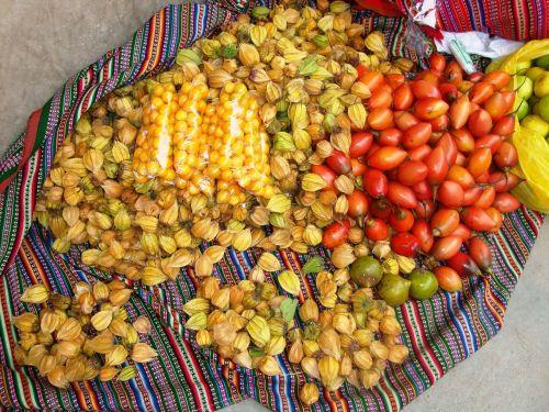 biodiversidad cajamarca perú