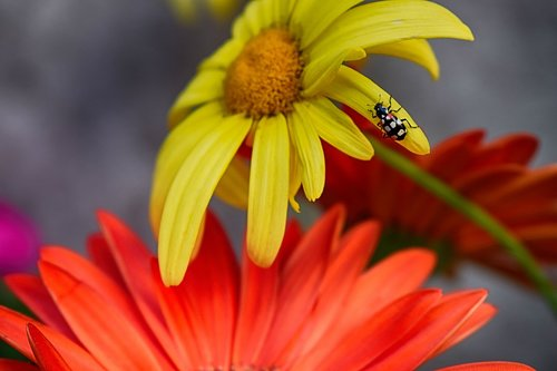 biodiversity  flowers  san antonio