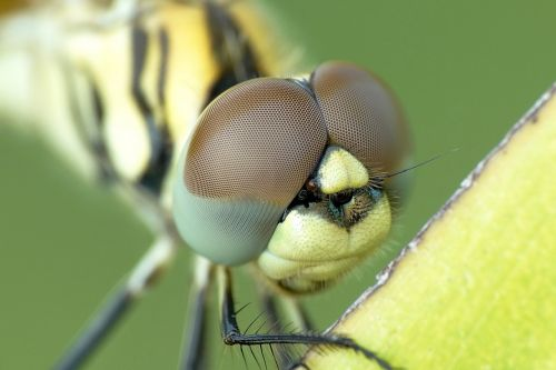 biology color dragonfly