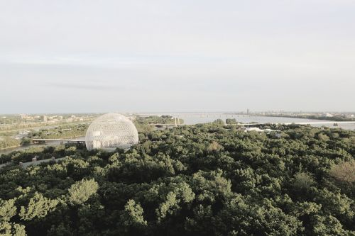 biosphere landscape trees