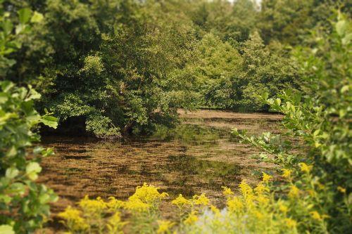 biotope environment lake