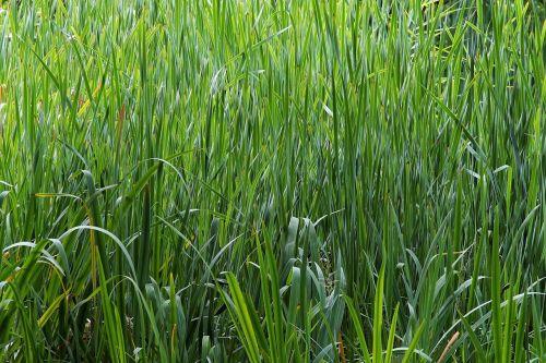 biotope moisture grasses