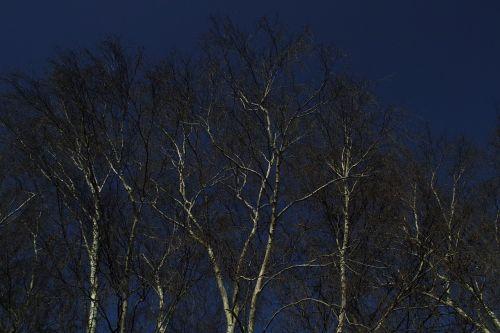 birch drama sky