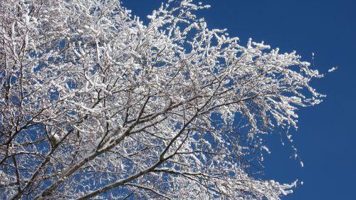 birch branches new zealand winter magic