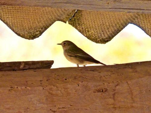 bird roof detail