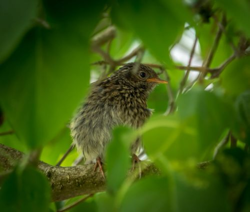 bird tree summer