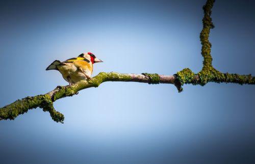 bird twig branch