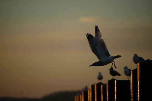 bird sea gull beach