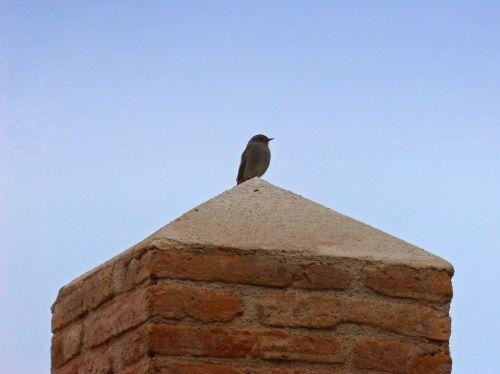 bird pedestal lookout