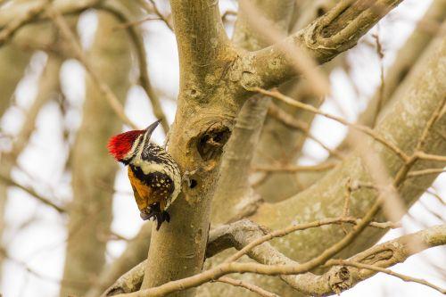 bird mysore india