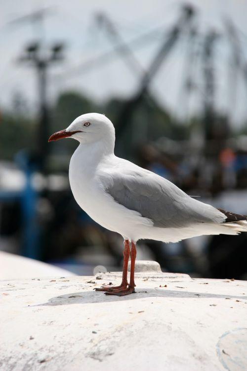 bird seagull ave