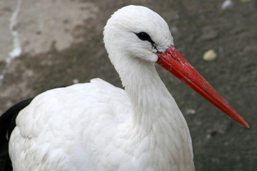 bird beak red beak