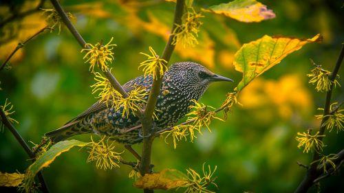 bird yellow spring