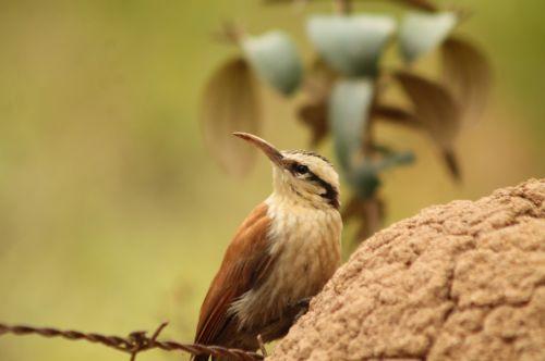 bird birdie nature