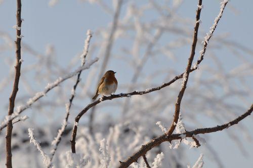 bird snow cold