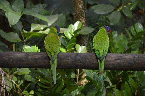 bird feathers plumage
